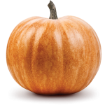 Collection Scent - Spiced Pumpkin